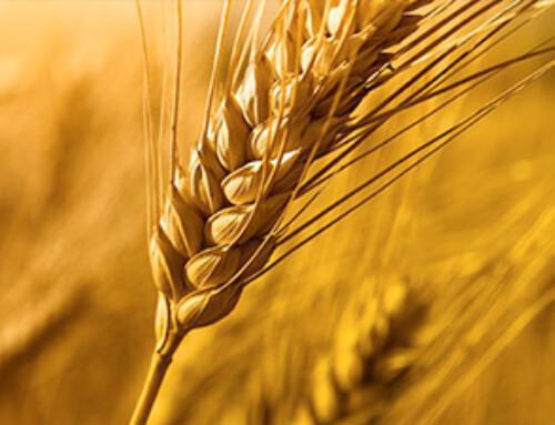 Che cos'è un lubrificate food grade o lubrificante ad uso alimentare?